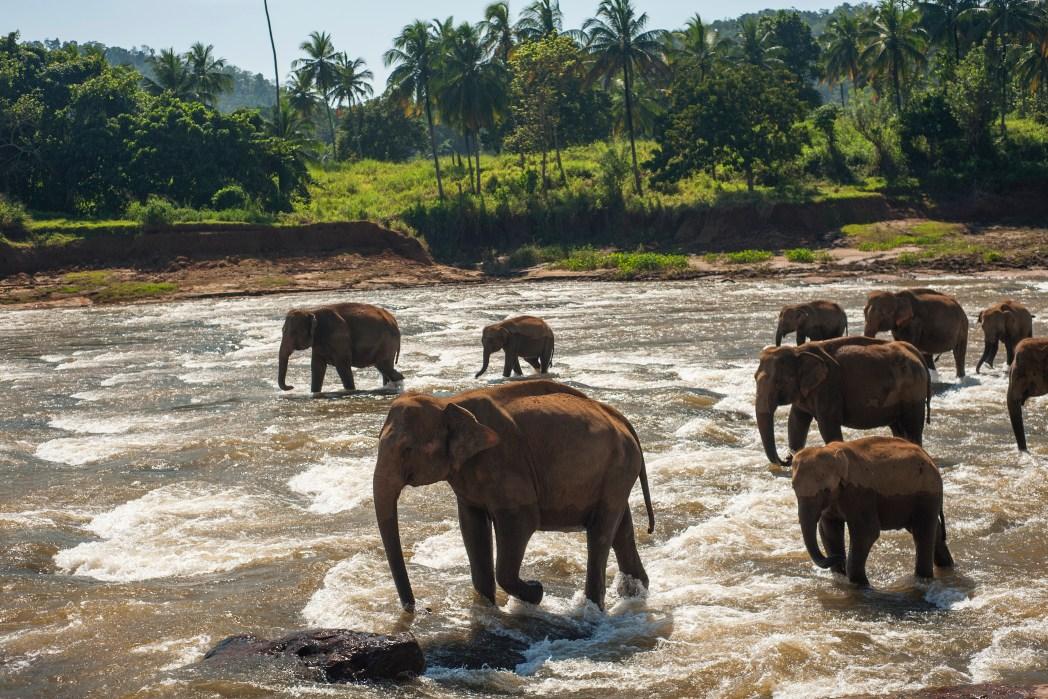 elefanter,indien