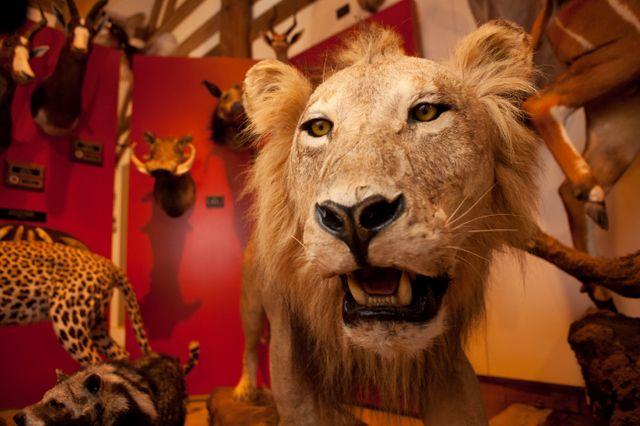 valdemarslot jagt og trofæmuseet